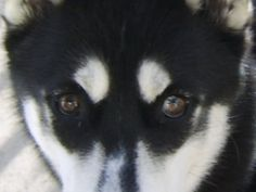 Sara's left eye is part blue...weird