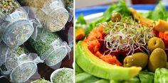 Propiedades y beneficios de los germinados, y cómo crecerlos - Vida Lúcida