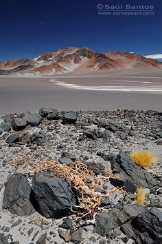 Catamarca, Argentina   - Explore the World with Travel Nerd Nici, one Country at a Time. http://TravelNerdNici.com