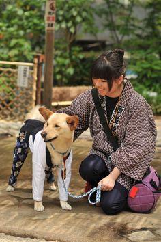 Festival dog, Senja Matsuri, Tokyo