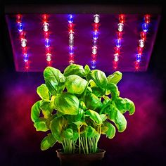 XenLux 20 Watt SixBand LED Hydroponic Grow Light Panel ** You can find out more details at the link of the image.
