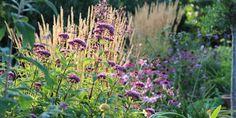 """FAVORITTERNE I MIN SENSOMMERHAVE / Favorites in my """"late-summer-garden"""""""