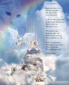 is angels for animals rainbow bridge Cat Quotes, Animal Quotes, I Love Cats, Crazy Cats, Rainbow Bridge Poem, Pet Poems, Dachshund, Pet Loss Grief, Pet Remembrance
