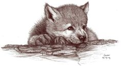 wolf cub by Liedeke