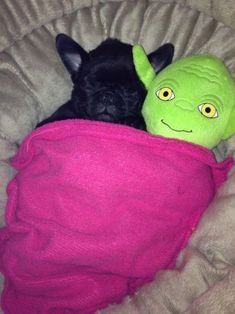 French Bulldog Puppy taking a nap with friend Yoda, no big deal! Raza Pug, Funny Dogs, Cute Dogs, Amor Pug, Baby Animals, Cute Animals, Pugs And Kisses, Pug Love, My Animal
