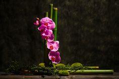 Bamboo and Orchids Ikebana
