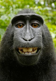 A macaque monkey in Indonesia took a camera from a wildlife photographer before snapping himself in a variety of poses.