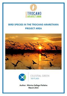 Find out how carbon projects help to protect species of birds in the Amazon from the risk of extinction. http://www.celestialgreenventures.com/conservation/carbon-projects-provide-safe-haven-for-endangered-birds
