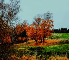 Autumn over the hill from Grandma's House by Christan Cooper Over The Hill, Vineyard, Country Roads, Autumn, Wall Art, Pretty, Photography, House, Outdoor