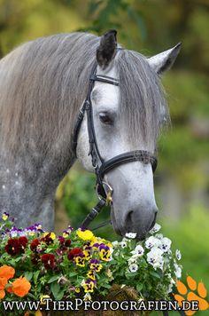 Horse Photography - by Sara Landvogt Tierfotografie
