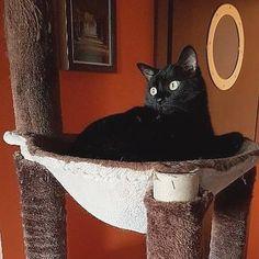 Trzeba się nacieszyć drapakiem bo chcą go nam zabeać na zawsze :P #drapak #weeklyfluff #caturday #kot #cat #czarnykot #blackcats #excellent_cats #love #leniwce #leniuch