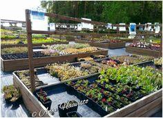 The garden shop perennial area.