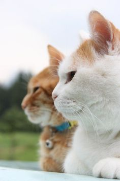 #kitty#cat