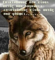 Wise Words, Greek Quotes, Narcissist, Dogs, Spirit, Animals, Beautiful, Animales, Animaux