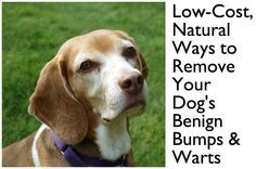 How to cure certain benign types of bumps and warts on dogs, without going to a vet, for the price of a bottle of castor oil.