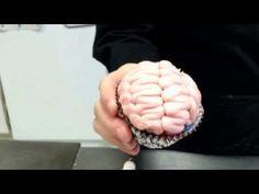 How to make a cupcake look like a brain for Halloween - YouTube
