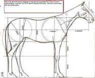 Image result for human horse proportions