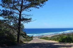 Coastal View- Morning view from Torrey Pines State Beach. La Jolla Ca. #coastalview #morning #view #ocean #trees #picture #coastline #photo #torreypinesstatebeach #beach #travel #destination #vacation #location #visit #torreypines #lajolla #sandiego #cali