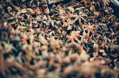 Star anise seeds  by vaprintables on @creativemarket