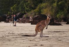 Kangaroos at Dawn - Cape Hillsborough - This Wild Life of Mine Big Draw, Big Country, Destin Beach, Kangaroos, Wild Life, Dawn, The Good Place, Destinations, Australia