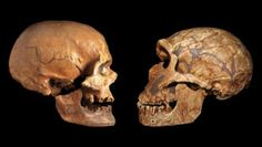 Science News Articles, Latest Science News, Scientific Articles, Types Of Humans, Evolutionary Biology, Human Evolution, Archaeological Discoveries, Behavioral Science, People Around The World