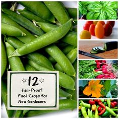 12 Fail-Proof Food Crops for Beginners     http://smallgardenideas.net/12-fail-proof-food-crops-for-beginners/
