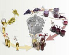 Science & Vie. Les étapes de la vinification