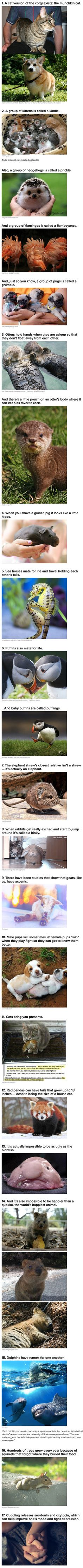 We have rounded up some geeky animal facts and stories you never knew about.