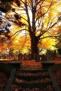 "autumn-frolic: "" ""Rich man, poor man, come away. Come to dance the Macabray."" – Neil Gaiman, The Graveyard Book "" Source by hellbettytarrah Autumn Day, Autumn Leaves, Foto Nature, Vermont, Old Cemeteries, Graveyards, Belleza Natural, Mellow Yellow, Fall Halloween"