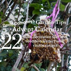 David Domoney's Garden Tips Advent Calendar Day 22