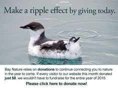 Make a ripple effect by giving to Bay Nature today.
