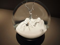 Snow globes by Walter Martin and Paloma Muñoz by Bekathwia, via Flickr