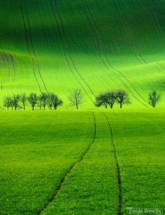 Green Lines by Tomáš Vocelka.  South Moravian landscape near Kyjov, Czech Republic. #Green #緑