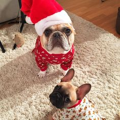 You put us in our onesies and Beans still gets to wear the Santa hat?! What is this!  by cityfrenchies http://ift.tt/11QyVEr