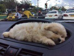 Sshhhh! She's sleeping don't disturb!!