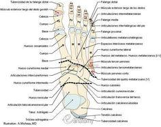 Resultado de imagen de huesos del pie imágenes y nombres
