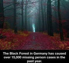 "Story idea. The Black Forest in Germany has ""caused"" over 1,500 missing person cases in the past year. (Research and story idea here somewhere!)"