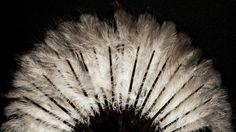 'WEAPONS OF SEDUCTION - 18th to 20th Century European Fans' The Fan Collection of the Medeiros e Almeida House-Museum Leque de plumas de avestruz # © Hugo Amaral/Observador