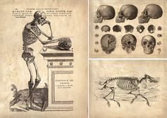 Curious Prints recreation of 16cent. anatomy book.