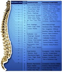 energy flows from the brain down the spinal chord to all parts of the body
