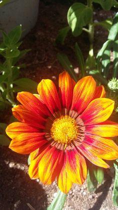 Flores da GATOMALOKO