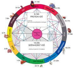 tüdő   Kínai-medicina Acupressure, Acupuncture, Native American Medicine Wheel, Health And Nutrition, Health Fitness, Timeline Photos, How To Lose Weight Fast, Health And Beauty, Vitamins