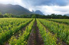 Lanzerac Wine Estate   http://www.lanzerac.co.za/wine-range-cellar/