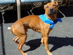 GONE --- URGENT - Manhattan Center    TREVOUR - A0994827   MALE, TAN, PIT BULL MIX, 4 yrs  STRAY - STRAY WAIT, NO HOLD  Reason STRAY   Intake condition ILLNESS Intake Date 03/25/2014, From NY 10457, DueOut Date 03/28/2014  https://www.facebook.com/photo.php?fbid=778279172184964&set=a.617938651552351.1073741868.152876678058553&type=3&permPage=1