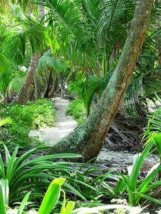 an inviting path through a tropical rain forest in Belize Rainforest Biome, Belize Vacations, Seaside Garden, Crop Pictures, Belize City, Fantasy Island, Paradise On Earth, Central America, South America