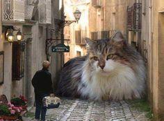 Giant cat in street, funny!
