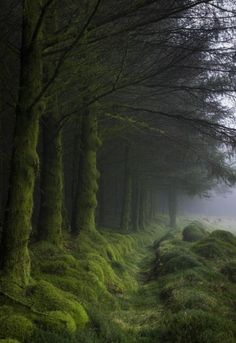 A misty forest nestled on the hillside of the Cairnsmore of Fleet, Galloway Forest Park, Scotland.
