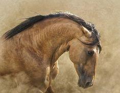 Bolero Kiger Mustng Stallion - Freedom By Ron McGinnis