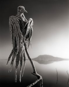 Creepy images of animals that become calcified when they die because of the lake's high alkaline levels
