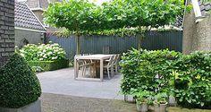 http://www.tuindesign-ten-horn.nl Tuinarchitect - tuinontwerp. Moderne eigentijdse mooie kleine stadstuin met groot terras en dakbomen in Limburg.